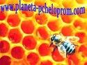 Планета Пчелопром - інтернет-видання для любителів бджіл та меду