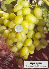 Саджанці винограду сорту Аркадія
